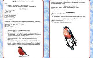Конспект прогулки весной в подготовительной группе «наблюдение за перелетными птицами»
