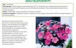 Конспект занятия в 1 младшей группе. комнатное растение бальзамин