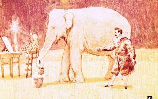 Дуров. слон бэби