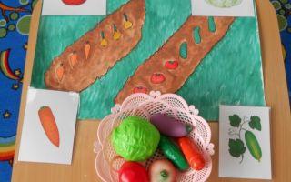 Конспект занятия в группе раннего возраста. овощи: огурец и капуста
