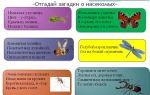 Сценарии праздников и развлечений в начальной школе