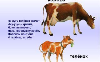 Конспект занятия в группе раннего возраста. корова и телёнок