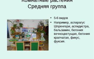 Конспект занятия в группе раннего возраста. комнатные растения