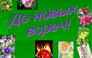 Викторина о растениях для начальной школы 8-10 лет с ответами