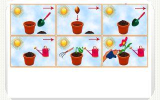 Конспект познавательного занятия про цветы в детском саду для старших дошкольников
