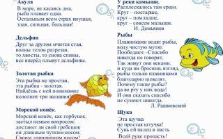 Стихи для детей 3-4 лет про рыб, земноводных, моллюсках