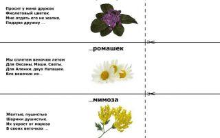 Загадки про цветы для детей 5-7 лет с ответами