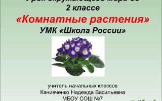 Конспект урока по окружающему миру, 2 класс. комнатные растения. школа россии