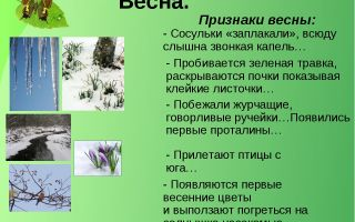 Рассказы о весне для школьников. дерево