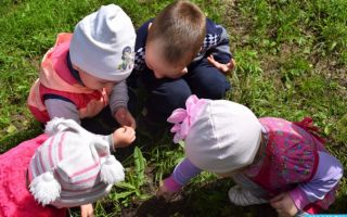Наблюдение за природой летом в старшей – подготовительной группе