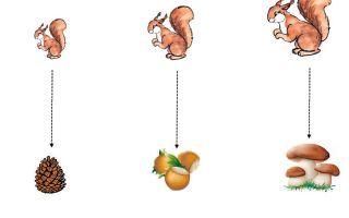 Конспект познавательного занятия в старшей группе детского сада. тема: белка и бурундук