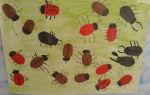Конспект занятия в старшей группе на тему «насекомые»
