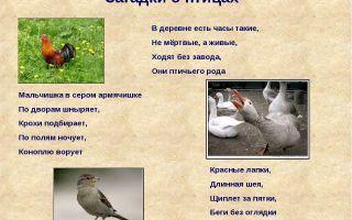 Загадки про птиц и животных для школьников с ответами