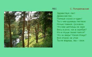 Стихи про «родной край» для детей дошкольников