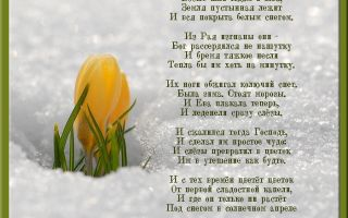 Ольга чюмина. стихотворение «подснежник»