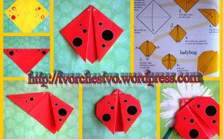 Оригами «божья коровка». схема для детей