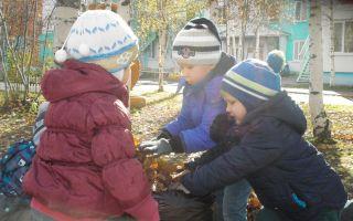 Прогулки осенью в младшей группе
