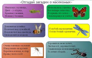 Загадки про насекомых для детей 6-7 лет с ответами