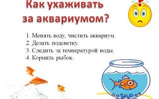Как ухаживать за аквариумными рыбками