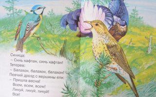 Рассказы о птицах для школьников. лесные домишки