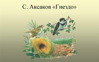 Аксаков «гнездо»