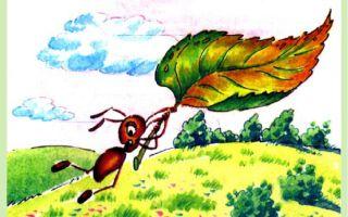 Бианки «приключения муравьишки»