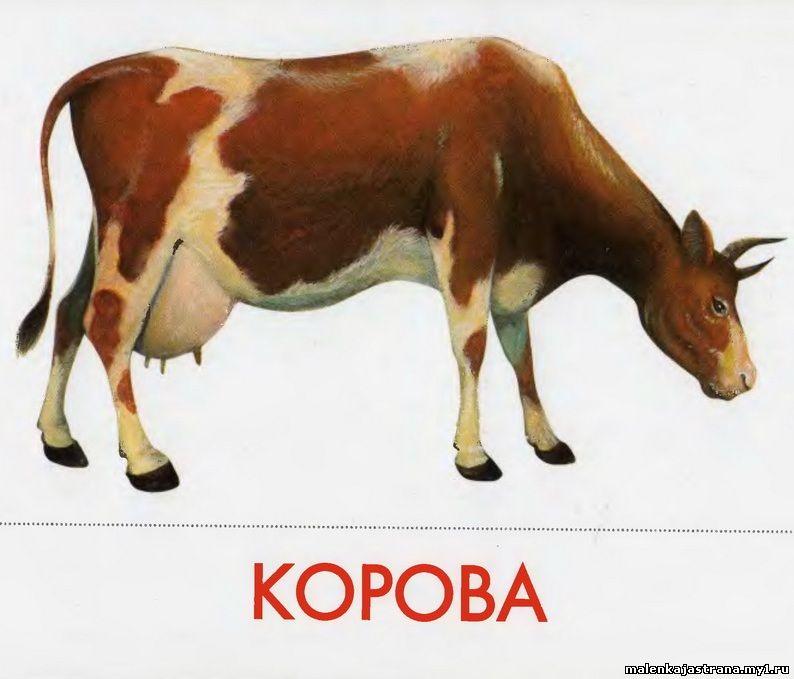 Конспект занятия в группе раннего возраста. корова и ...